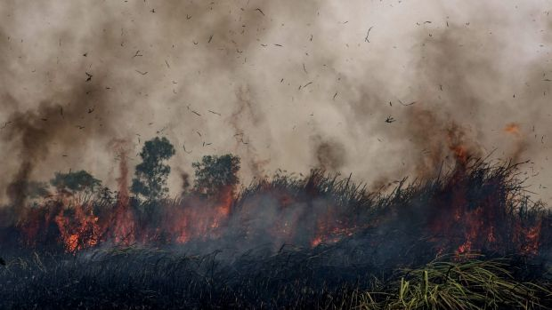 Fire burns peatland and fields at Sungai Rambutan village, South Sumatra.
