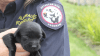 This little battler is too small to work for Border Protection, but she