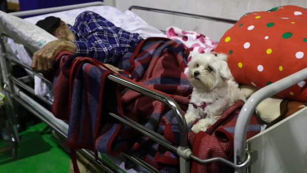 Antonio Putini, 97, sleeps as his dog keeps watch at a temporary shelter in a gymnasium in Amatrice.