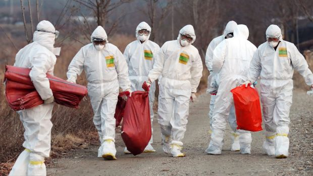 Health officials carry a sack containing killed chickens after a suspected case of bird flu in Incheon, South Korea, ...