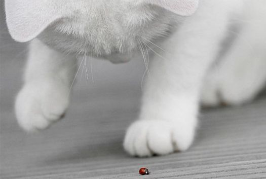 Ladybug and the cat