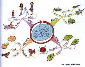 Mind Map Training