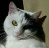 Lola, The Millionaire Cat