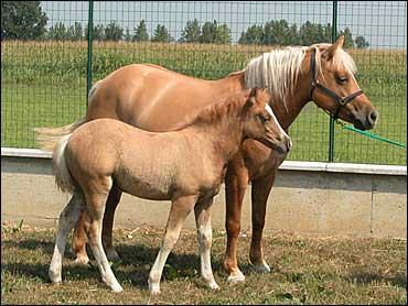 14. Prometea the Horse