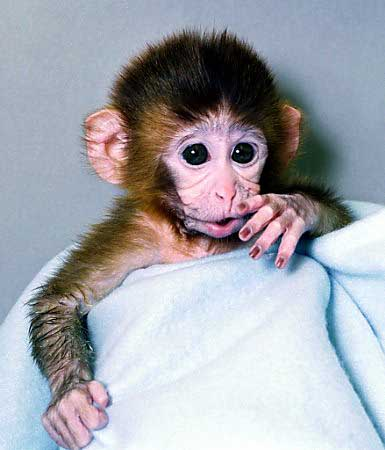 8. Tetra the Rhesus Monkey
