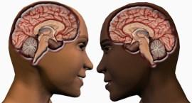 male-female-brain11