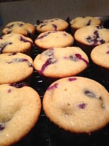 Blueberry Muffins - 12
