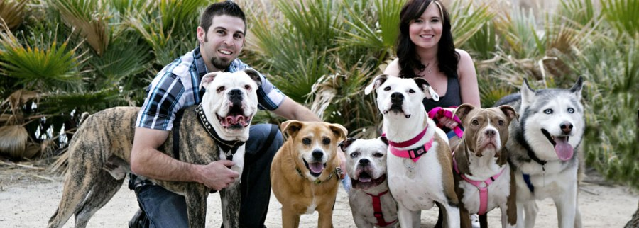 Dog Rescue Charity