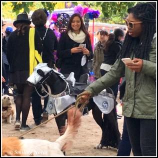 dog-parade