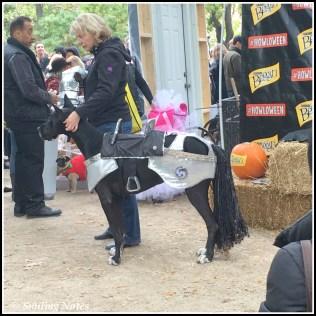 dogs-parade2