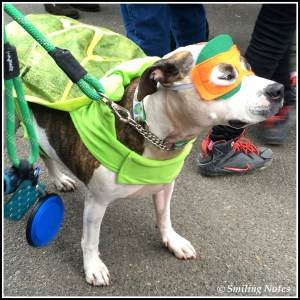 tmnt-dogs-costume