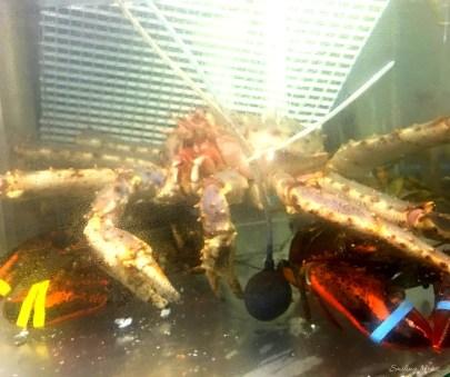 live-seafood-crab