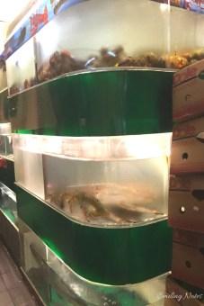 live-seafood