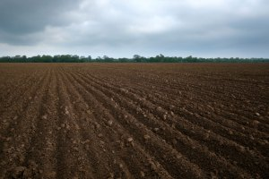 Large field of tilled dirt