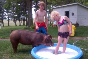 Kids playing in small pool with thier pig