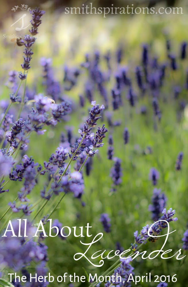 All About Lavender, The Herb of the Month for April 2016