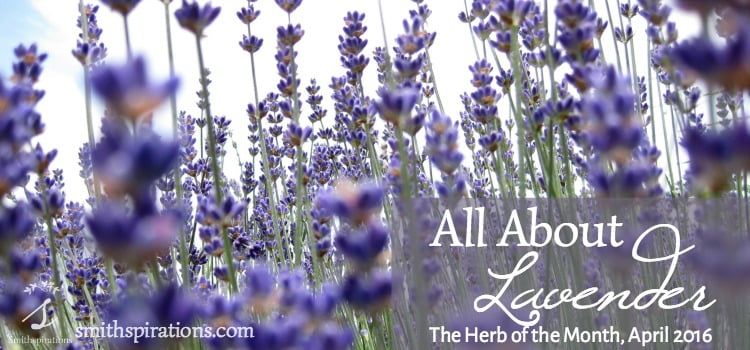 Lavender has so many wonderful uses in the kitchen, bath, and medicine chest. I love this gentle herb! Learn all about it here: All About Lavender, the Herb of the Month for April 2016