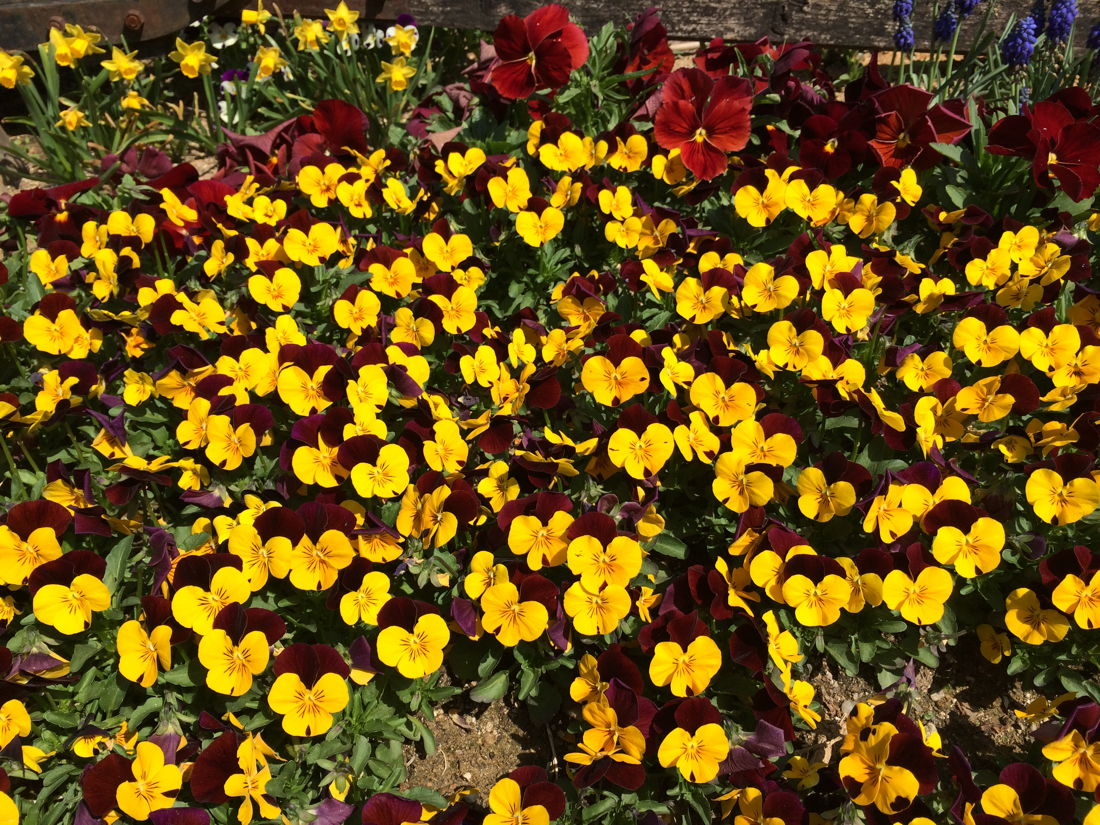 20 common items in terms and conditions like field of pansies