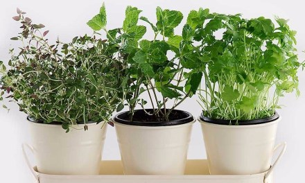 7 Herbs You Can Grow at Home
