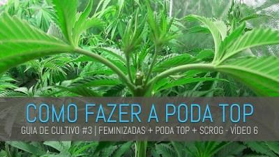 CAPA GUIA 3 6 COMO FAZER A PODA TOP   GUIA DE CULTIVO #3   FEMINIZADAS + PODA TOP + SCROG   VÍDEO 6