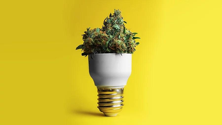 Smoke Buddies 10 anos da brisa a ideia Direito, cultivo, cozinha: cursos oferecem conhecimento especializado em cannabis