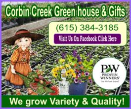 Corbin creek purple border ad 300