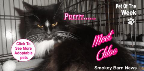 pet of week Chloe cat slider