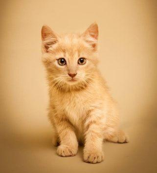 Vern cat