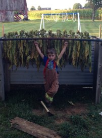 Little tobacco farmer 4