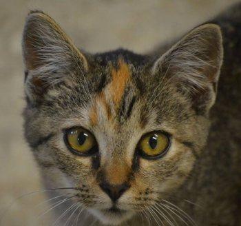 Winnie cat