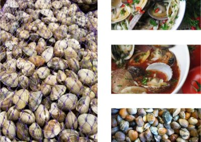 Farmed Manila Clams