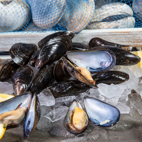 LIVE FARMED AMERICAN MUSSELS