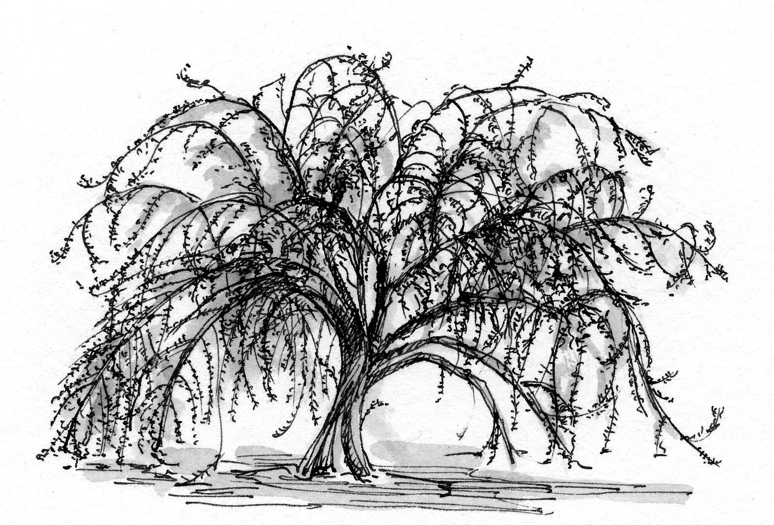 Mark 4 30 32 Illustration