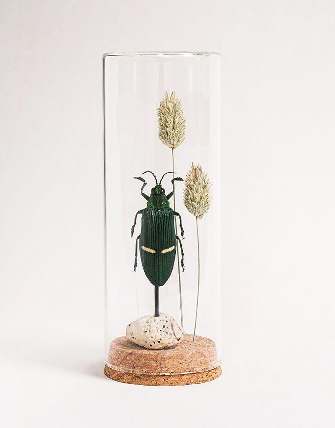 Catoxantha Opulenta in glazen buis