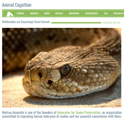Rattlesnakes are Surprisingly Social Animals