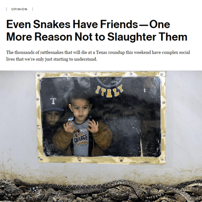 Even Snakes Have Friends—One More Reason Not to Slaughter Them