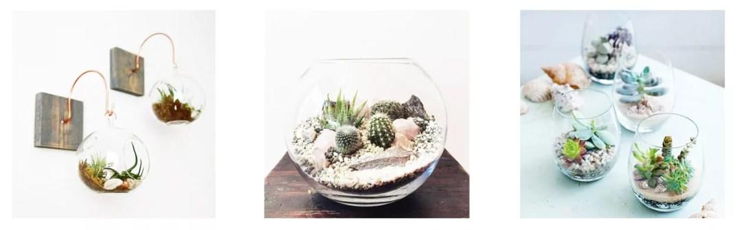 diy terrario de cactus