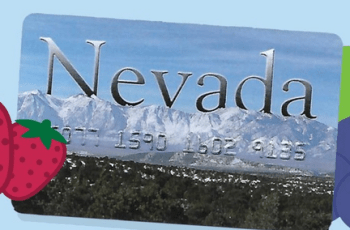 Check Nevada EBT Card Balance