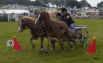 scurrying at Kington Show