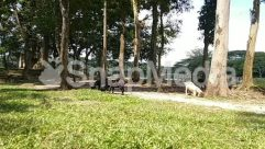 Animal, Antelope, Arbour, Arecaceae, Bench, Building, Canine, Cattle, Chair, Conifer, Cottage, Countryside, Cow, Cushion, Dining Table, Dog, Forest, Furniture, Garden, Grass, Grove