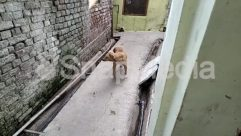 Alley, Alleyway, Animal, Brick, Building, Canine, Concrete, Countryside, Ditch, Dog, Gravel, Housing, Nature, Outdoors, Rock, Sun Light, Window
