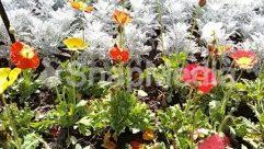 Blossom, Flower, Garden, Gardening, Greenhouse, Outdoors, Petal, Plant, Vegetation