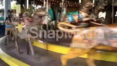 Amusement Park, Animal, Apparel, Carousel, Clothing, Horse, Human, Lighting, Mammal, Person, Theme Park