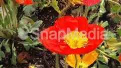Anemone, Animal, Anther, Asteraceae, Blossom, Flower, Geranium, Outdoors, Peony, Petal, Plant, Pollen, Poppy, Rose, Vegetation