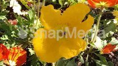 Pollen,Petal,Nature,Insect,Honey Bee,Flower,Bumblebee,bee