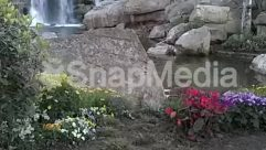 Aster, Blossom, Bush, Flower, Nature, Outdoors, Petal, Plant, Pond, Rainforest, River, Rock, Stream, Vegetation, Water,water fall