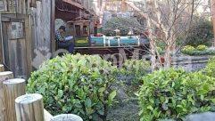 Locomotive,train,knotts