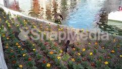Animal, Beak, Bird, Blossom, Duck, Flower, Goose, Grass, Land, Mallard, Mammal, Nature, Outdoors, Plant, Pond, Swan, Vegetation, Water, Waterfowl