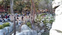 Adventure, Amusement Park, Animal, Apparel, Architecture, Blossom, Bridge, Building, City, Clothing, Crowd, Downtown, Flower, Garden, Grass, Helmet, Housing, Human, Lawn, Leisure Activities, Nature, Outdoor Play Area, Outdoors