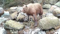 Animal, Bear, Brown Bear, Canine, Fox, Lesser Panda, Mammal, Nature, Outdoors, Pig, Polar Bear, Red Wolf, Rock, Soil, Wilderness, Wildlife, Wolf, Zoo